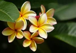 Best Fragrant Indoor Plants - indoor plants that are best for fragrance kerala latest news
