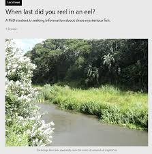 Seeking Eel When Last Did You Reel In An Eel Eel Town
