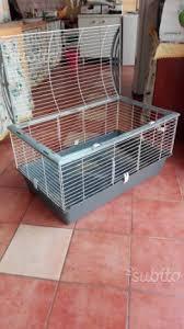 gabbie per conigli nani usate gabbia per cavie o conigli nani usata animali in vendita a cagliari