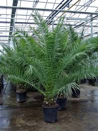 Nursery Plant Supplies by Homestead Wholesale Tree Nursery And Nursery Supplies Canary