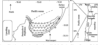 Sedimentology And Geochemical Evaluation Of Distribution And Enrichment Evaluation Of Heavy Metals In Mejillones