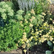 plante vivace soleil massifs massif bain de soleil notre prêt à planter illumine
