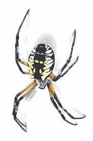 garden spider facts u0026 control get rid of garden spiders