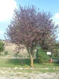 albero giardino la finestra di stefania come scegliere un albero da piantare in