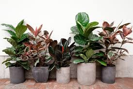 indoor plant spring indoor plant care 5 steps to happier houseplants