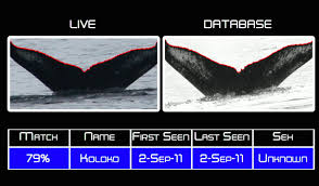achoo snot collecting drones are revolutionizing whale research