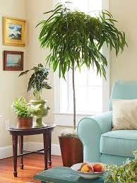 Easy Care Indoor Plants Indoor Trees That Spruce Up Any Space Indoor Trees Low