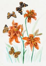 bouquet of lilies butterflies stock photo budogosh 53042355