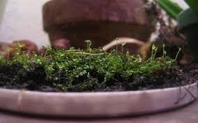 indoors garden how to grow moss indoors tips for creating an indoor moss garden