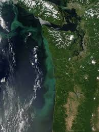 Satellite Map Of Washington State by Phytoplankton Bloom Off The Pacific Northwest Image Of The Day