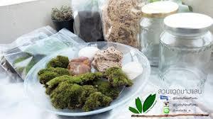 cuisine diy ช ดจ ดสวนในขวดแก ว diy ไซต s luckynewplants inspired by lnwshop com