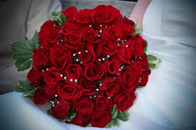 which color rose to give this rose day
