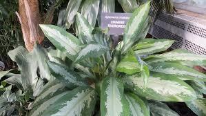 3 easy indoor plants newpro blog
