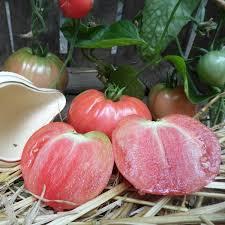 comment cuisiner le coeur de boeuf tomate coeur de boeuf la bonne graine