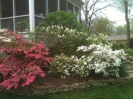 small landscaping trees and shrubs ideas landscaping trees and