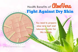aloe vera plant facts top 69 beauty health benefits of aloe vera uses side effects