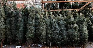 real christmas trees for sale why your christmas tree may cost more this year cbs news