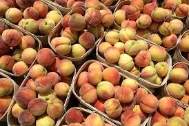 nissan altima for sale huntsville al alabama peach farmers expect big early crop anticipate need for