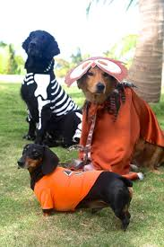 Animal Halloween Costumes 213 Animal Costumes Images Animal Costumes