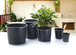 big plants small pots large planters pots giant plant pots for