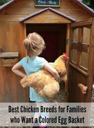 the best chickens breeds for families wanting a colored egg basket