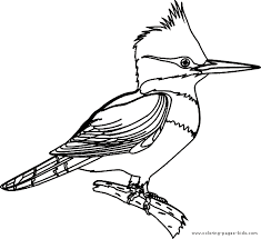 kingfisher coloring nature crafts ideas