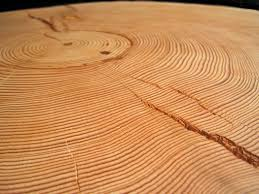 tree rings images Learning about tree ring dating archaeology southwest jpg