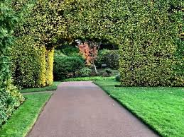The Royal Botanic Gardens Pathway And Hedge In The Royal Botanic Garden Picture Of Royal