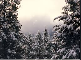 snowy treetops snow wallpaper