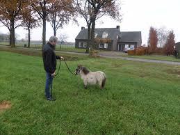 Suche Zu Kaufen Mini Pony Kaufen Im Tiermarkt Bei Deinetierwelt