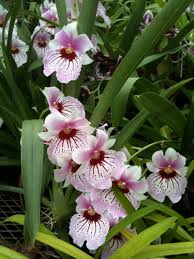 Flower Orchid Growing Orchids For Beginners