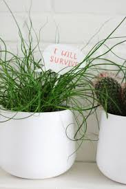 Cute Plant by Diy Speech Bubbles For Your Plants By Wilma