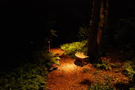 light up your landscape traditional home