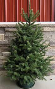 live christmas trees for sale table top christmas tree