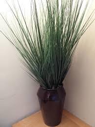 Buy House Plants Buy Cheap Indoor Plants Online Uk Dracaena Rikki For Sale Online