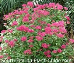 Landscaping Ideas For Florida by 185 Best Florida Landscape Plants Images On Pinterest