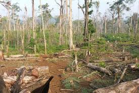 forests november 2017 browse articles conservation on central america