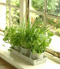 Window Sill Herb Garden by Kitchen Herb Pots Wooden Planter Window Sill Garden Plant Kit