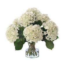 White Hydrangeas White Hydrangeas In Vase White U0026 Light Decor Accessories