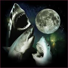 three wolf moon t shirt parodies teevault com