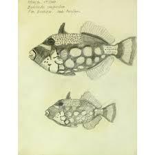 drawing clown triggerfish mapsandart original art antique