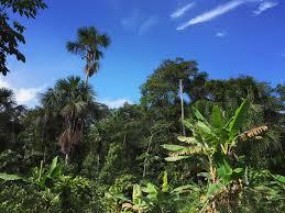 free stock photo amazon rain forest amazonian jungle jungle