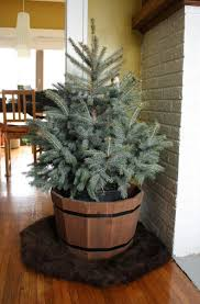 it s potted tree time merrypad