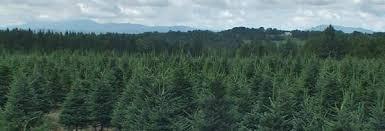 choose u0026 cut your christmas tree nh vt christmas tree association