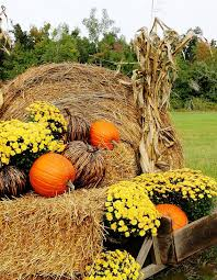 Cheap Harvest Decorations Fall Decorating Ideas For Outside And A Funny Story Hay Bales