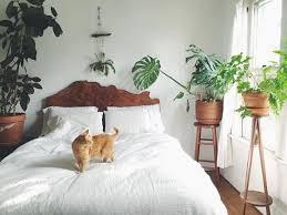 plantes dans la chambre quelle plante avoir dans la chambre