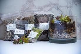 succulent terrarium kit cylinder diy terrarium kit succulent