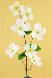 dogwood flowers flower 32in