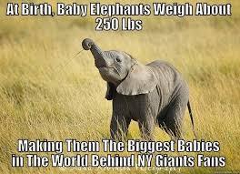 Funny Ny Giants Memes - ny giants fans quickmeme