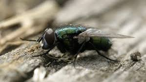 what is the purpose of a fly reference com